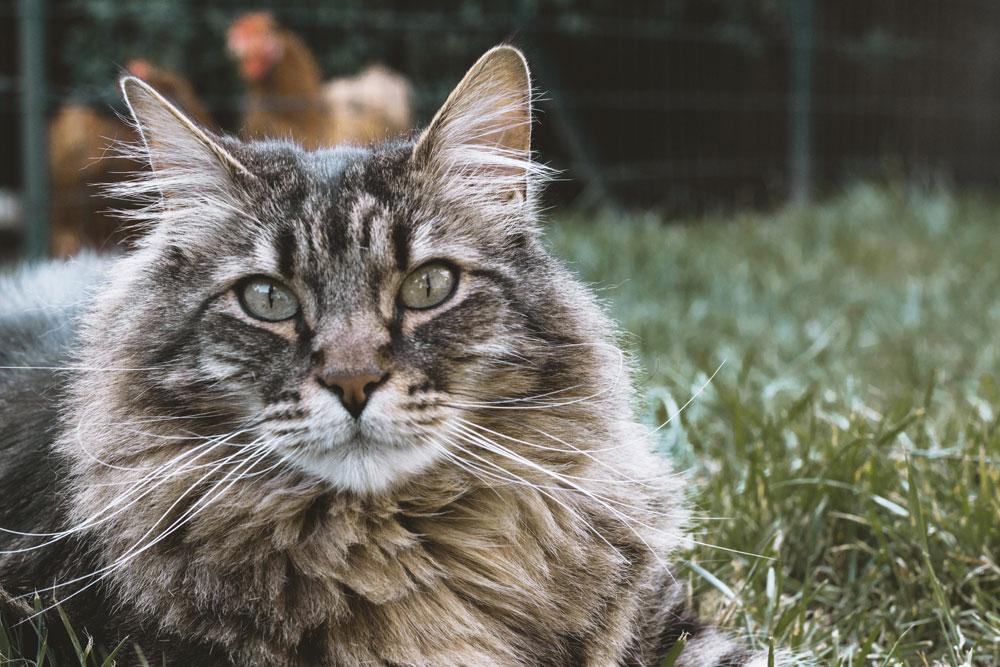Katze auf Wiese - Elasa Nobelt - unsplash.com