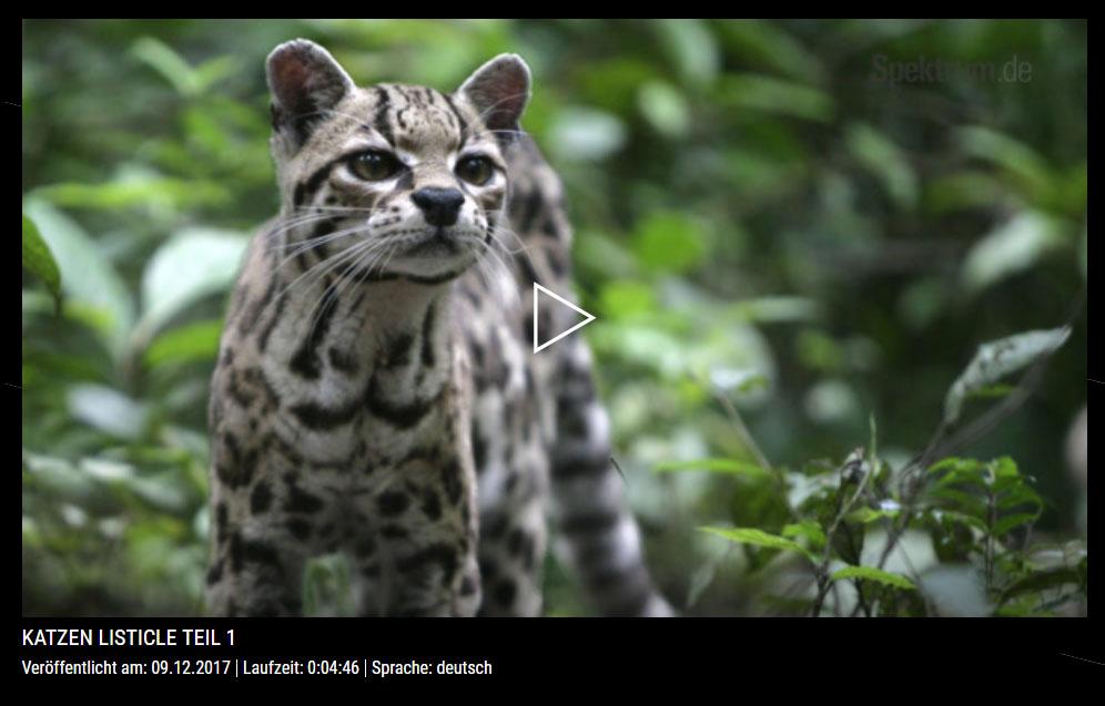 Faszinierende Katzen - Teil 1 - Spektrum der Wissenschaft